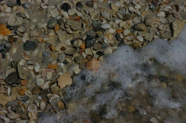 The beach is covered with shells. But don't take any.