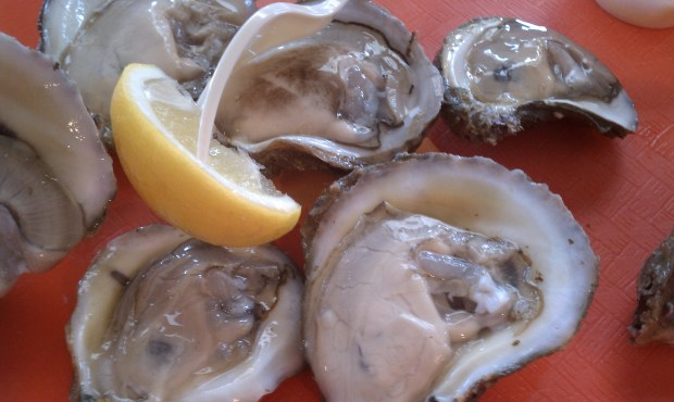 Massive and fresh oysters from the Apalachicola Bay.
