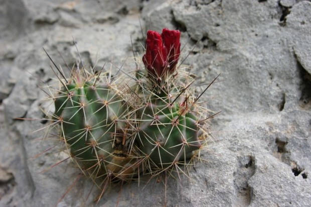 Flowers and cacti were blooming everywhere.