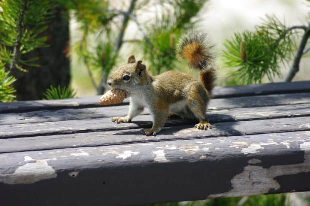 I know it's just a regular old squirrel, but it's pretty damn cute.