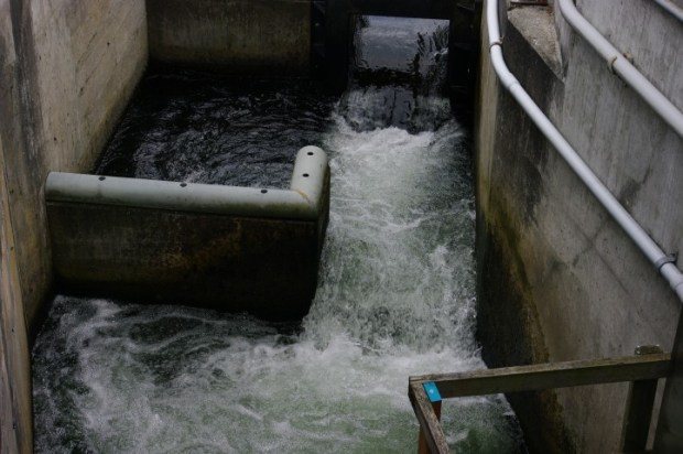 A step of the fish ladder from above.