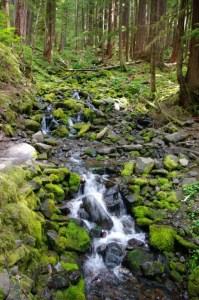 A mossy cascade.