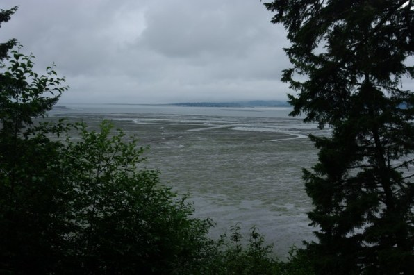 The Willapa Bay at low tide. 1/2 of all the water drains out during tidal changes.