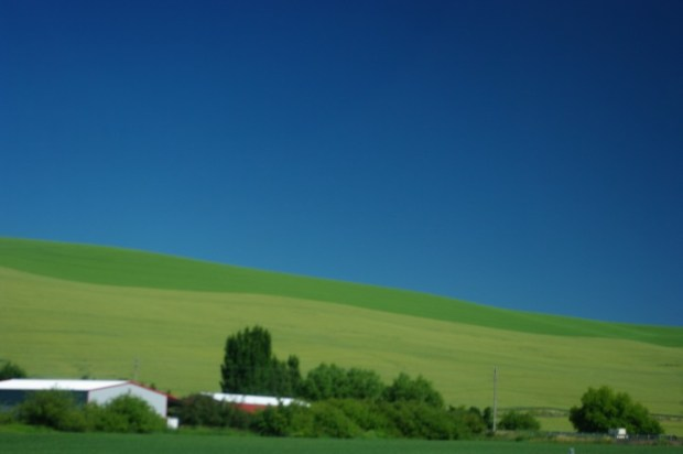 The Walla Walla countryside.