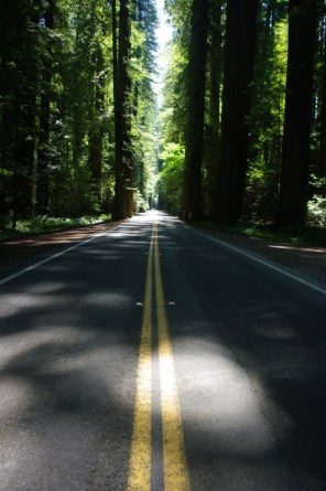 The Avenue of the Giants.