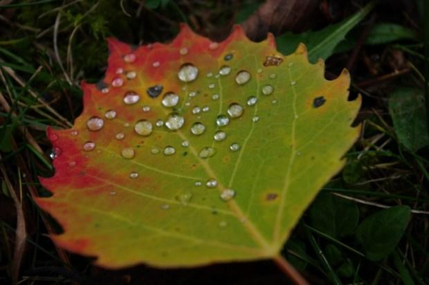 One leaf in a trillion.
