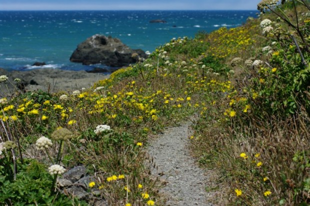 A trail along the Lost Coast.
