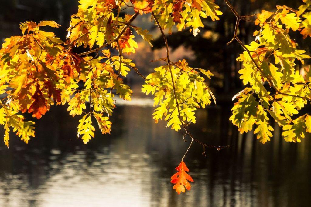 Lakes In Georgia - Lake Rabun in Fall