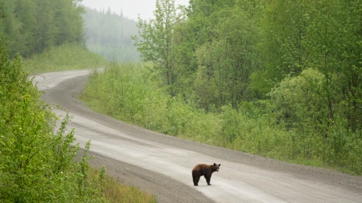 The Dempster Highway Road Trip Guide