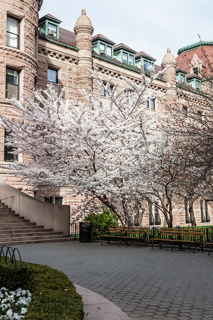 Blossoms in Manhattan, New York City
