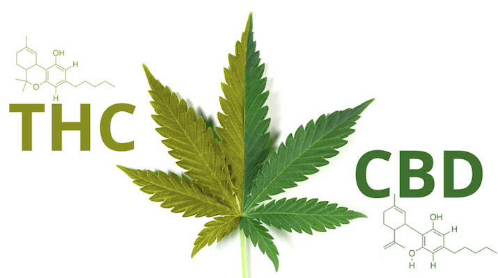 Image result for cbd turns into thc