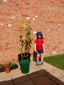 Investigating the sunflowers