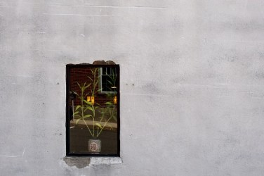 Street photograph of gray wall and window with Japanese pot and bamboo, taken for healing