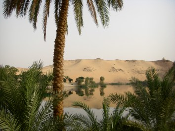 Aswan Palm and Dunes