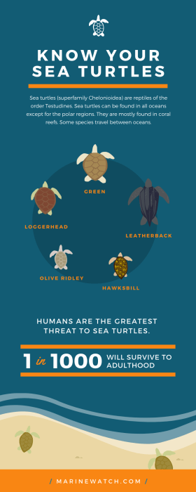Marine Conservation Sea Turtle Infographic