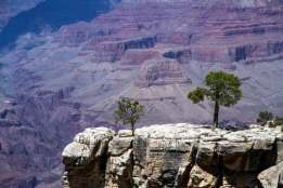 Meditative spot at Grand Canyon where you can let your mind wander