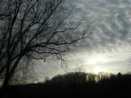 A Spooky Early Morning Scene