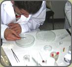 Propiedades antioxidantes productos Dr. Llano