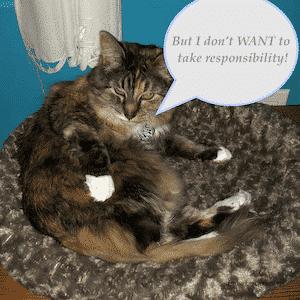 Responsibility? Response-ability! 1