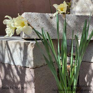 Winter Transitions, Spring Transformation 1