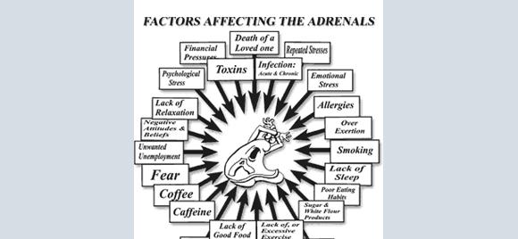 Adrenal Stress Index | Dr. Marnie