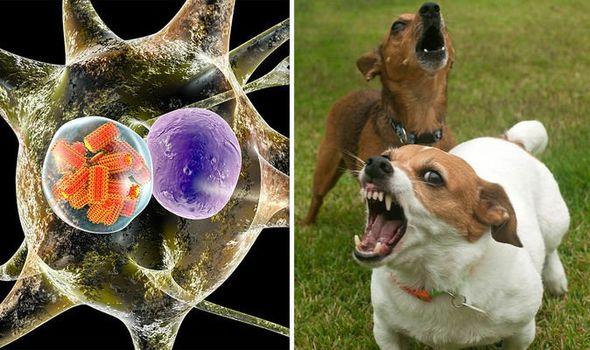 Rabies-outbreak-map-rabies-symptoms-rabies-dog-bite-1125644