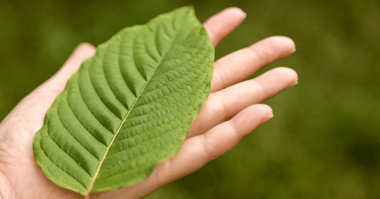 kratom leaf about to be banned by FDA