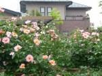 2010/5/25 撮影