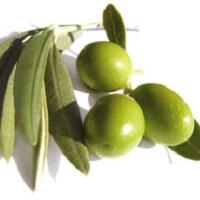 оливковые листья