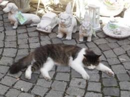 Chat faisant la crêpe - Lindau - Allemange