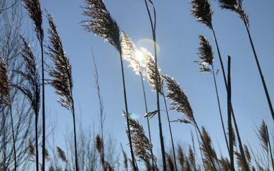 Faryzeusze i uzdrowienia – przekaz Jeszuy