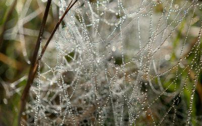 Odplątywanie sieci relacji – przekaz Mistrzów