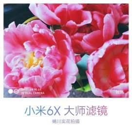 Xiaomi Mi 6X rear camera sample 1