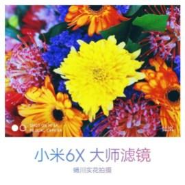 Xiaomi Mi 6X rear camera sample 2
