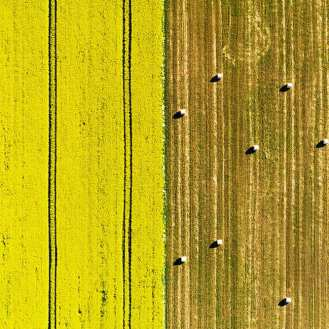 Karl Adami - Harvest