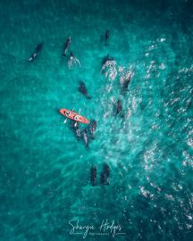 Kayak & Dolphins