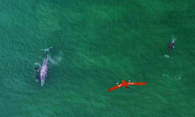 Whales Drone Research