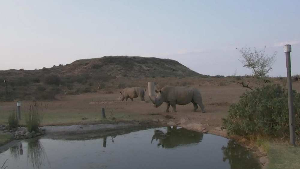 Visible image of rhinos in South Africa. Credit: Endangered Wildlife