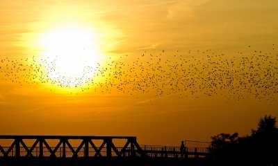 A swarm of birds