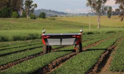 autonomous vegetable harvesting robot, Ladybird