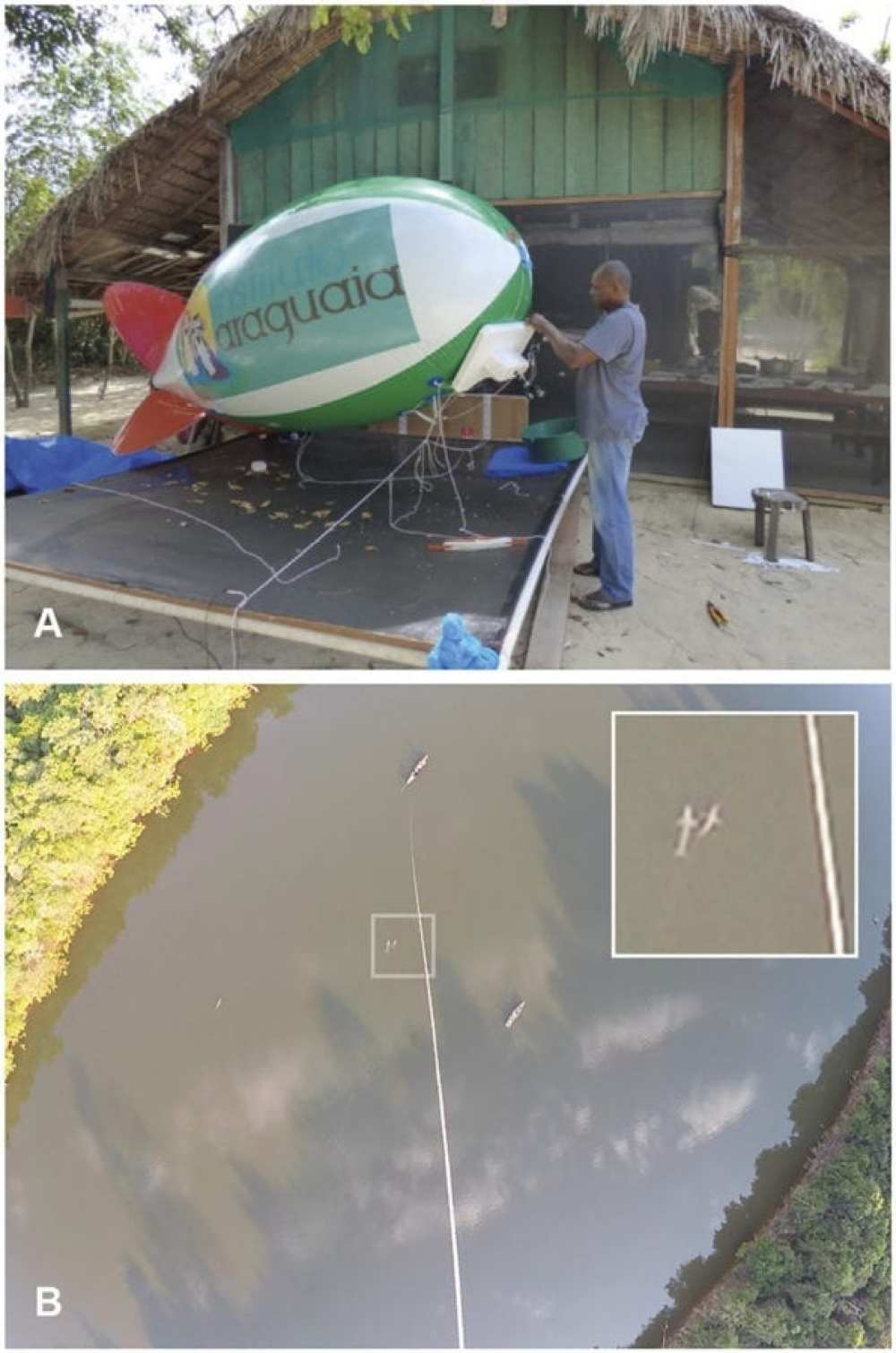 River dolphin aerial survey using the blimp. (A) Field assistant makes adjustments of the styrofoam system that held the GoPro camera on the blimp. (B) Screenshot of a video-recorded by the blimp camera during a survey of Inia araguaiaensis in the sector Estir~ao. Three dolphins are visible: a pair showed in the enlarged picture detail, plus a solitary one further leftdown. It is also possible to spot the two boats deployed in the survey, the bottom-right one with observers performing the visual survey, and the top-left one responsible for holding the blimp through a tether line.