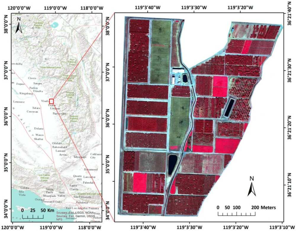 Study area location near Visalia, California (left) and a false color image as acquired by the UAV with a spatial resolution of 0.12 m and covering 64.6 ha (right).