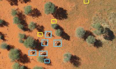 Aerial image analysed by artificial intelligence: the animals are framed in blue; yellow indicates other features of the landscape, such as bushes.