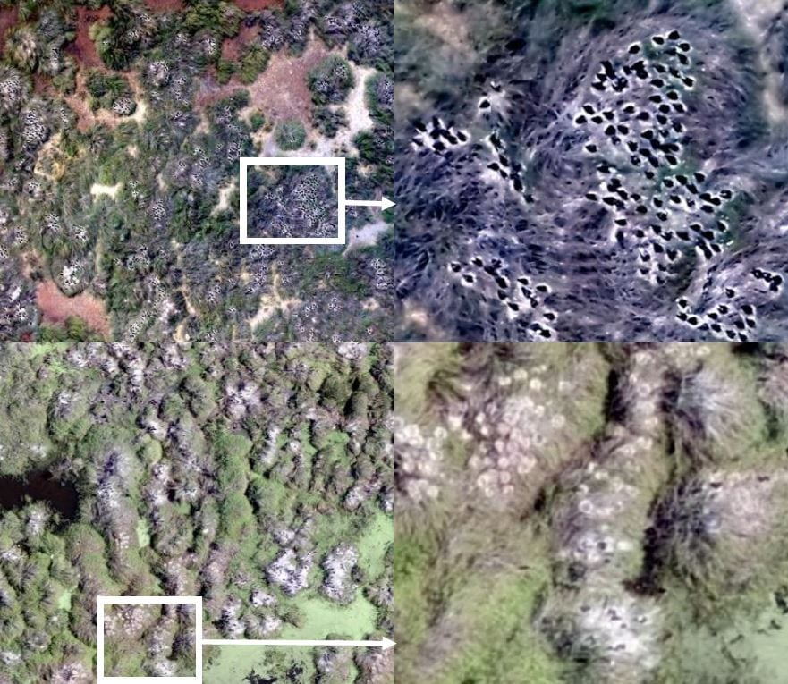 Example drone imagery showing the variation in nest types and environments across four breeding colonial waterbird colonies. Images from top row to bottom row are from the following colonies: Merrimajeel, Zoo Paddock, Eulimbah and Block Bank