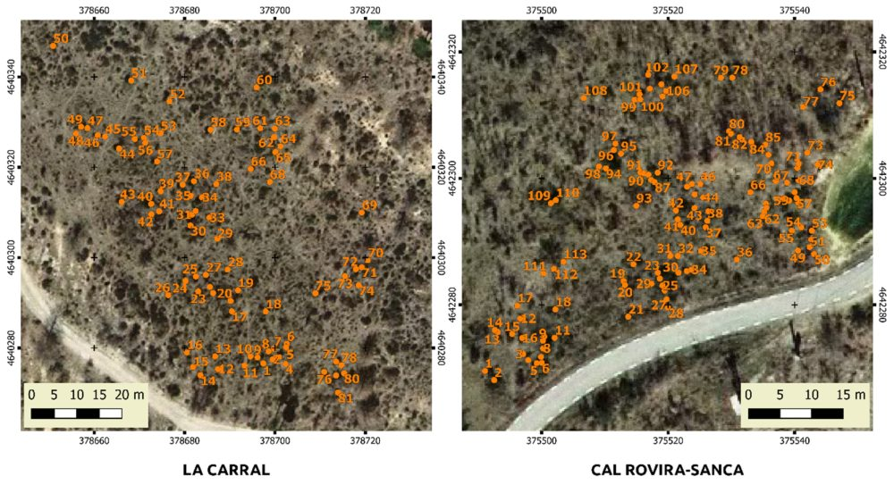 Aerial ortophotographs of both sites, with overlapped positions of all the pines found in the sampling areas.