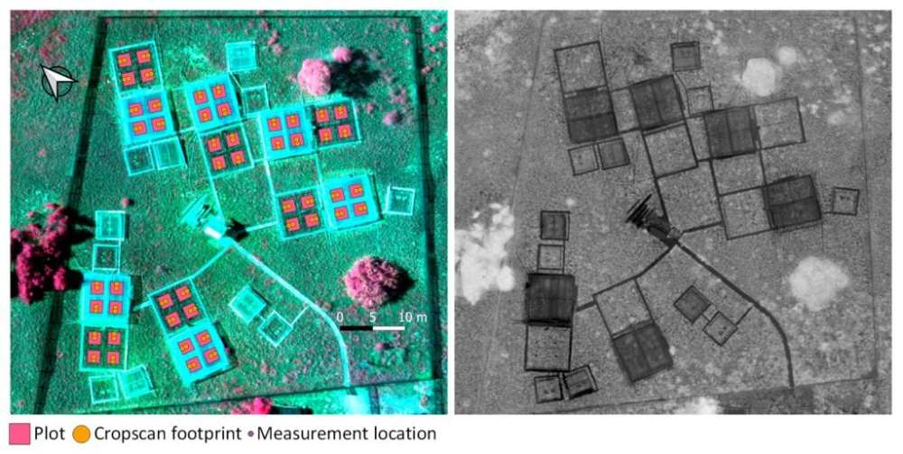 Left image shows a false color RGB composite with near infrared-red edge-red Sequoia bands with the overlay of plot limits, Cropscan sampling footprints and measurement location points. Right image shows Normalized Difference Vegetation Index (NDVI) image calculated with Sequoia near infrared and red bands evidencing the plots covered by plastic (darker plots).