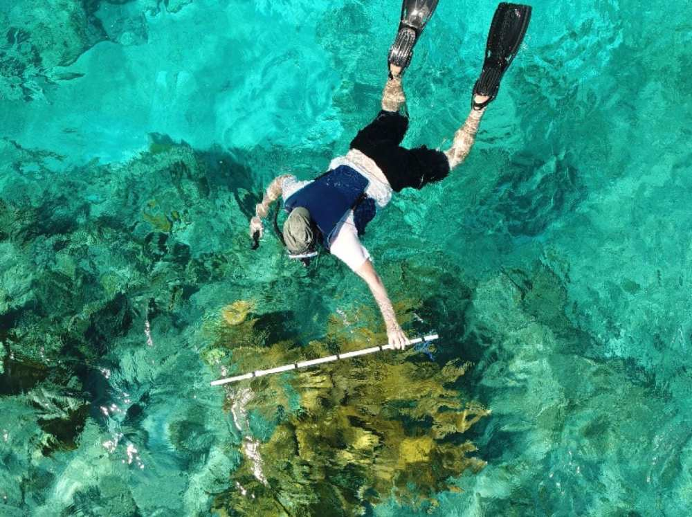 Taking measurements of the corresponding coral head with a 150 cm PVC pipe marked with 30 cm increments and photographed from an aerial UAV.