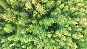 green aerial landscape