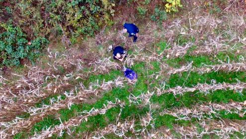 """From Sheriff Robert A. Graves: Good news! Deputies responded to a missing elderly person on Thayer Road on Sunday November 5th around 11:30am. Deputies obtained information and began a search. K9 and a Sheriff's Office Drone operator were called in to aid in the search. The search was slowed due to difficult terrain and a corn field. The Drone pilot, Officer Adam Krolfifer was able to locate the missing person within 25 minutes. The Drone program at the Sheriff's Office is one of our newest projects and one more project in our effort of going from """"Good to Great"""" in professional community service. I am thankful to hear the good news of the safe return of the missing person. The family expressed their gratitude for the quick response. I am very proud of all of our team in making this safe return. Keep up the great work! Sheriff Robert A. Graves"""