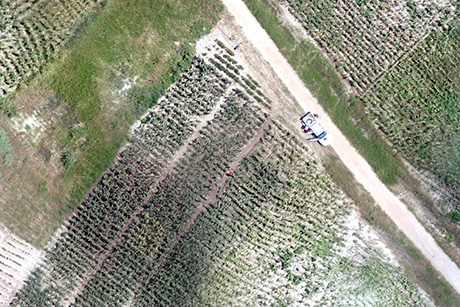 Aerial image of a farm field in Liwonde, Malawi. Professor Carroll captured the image via drone at about 150 feet above ground level. Missions were flown at altitudes ranging from 100 to 1,000 feet.